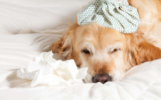 Симптомы и лечение пневмонии у собак и щенков