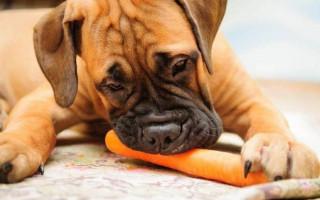 Какие овощи и фрукты можно давать собакам для нормального пищеварения