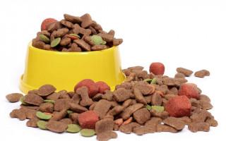 Сухой и влажный корм для собак