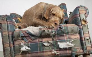 6 простых способов отучить собаку портить мебель