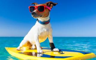 Как правильно выбрать гостиницу для собак