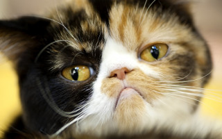 Болит ли у кошки голова