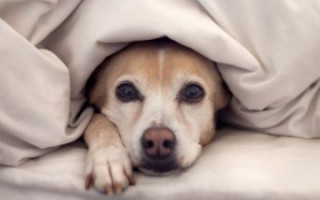 Что необходимо знать собаководу о переохлаждении