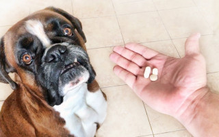 4 способа заставить собаку принять лекарство, если добровольно таблетки она не ест