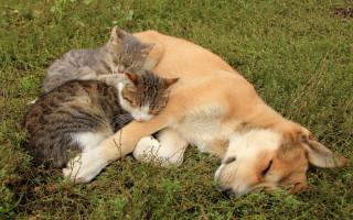 10 пород собак, которые спокойно живут в одном доме с кошками