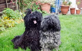 Самая страшная собака в мире — фото и описание
