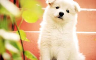 Парагрипп собак: симптомы, лечение, профилактика