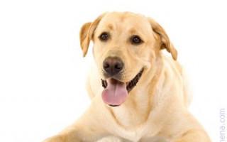 Можно ли смотреть, как собака ходит в туалет: что говорят приметы