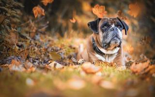Уход за собакой осенью