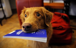 Ветеринарный паспорт на собаку: зачем он нужен и как его оформить
