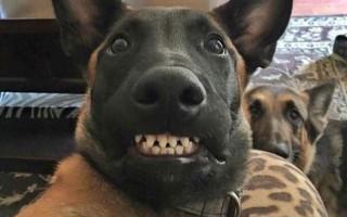 6 собак, которые могут проявить агрессию совершенно внезапно