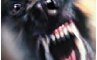 Бешенство у собак симптомы, инкубационный период, вакцинация