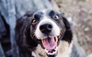 Причины гиперактивного поведения собак