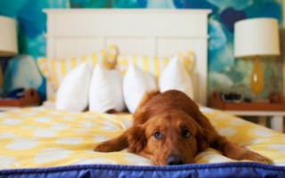 4 способа отучить собаку спать в вашей кровати