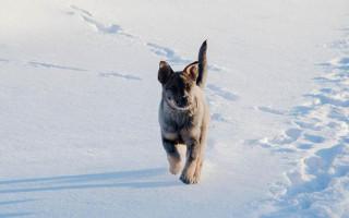 Как защитить собаку зимой: одеваем в одежду, защищаем лапы от реагентов, корректируем режим питания