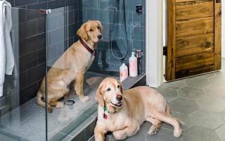 Как часто можно купать собаку
