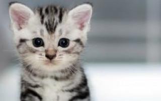 Причины и способы подавить агрессию кота и успокоить животное, если он бесится, мяукает, плачет и перед сном