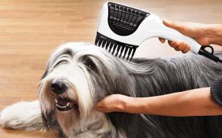 Длинношерстные собаки: как ухаживать за шерстью