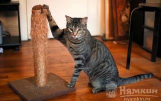 Котик заскучал: 4 верных способа улучшить настроение питомца