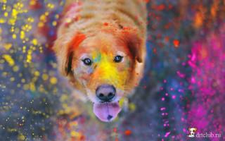 Как видят собаки окружающий мир