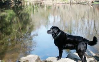 10 трогательных историй о верных собаках