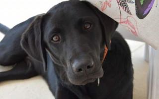 Симптомы и лечение печеночной недостаточности у собак
