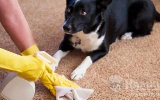 Как приучить собаку к выгулу