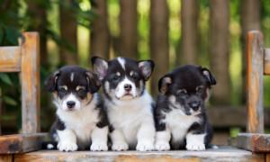 Как раздать щенков
