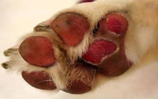 Как лечить ожоги и обморожения у собак