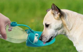Как выбрать поилку для собаки