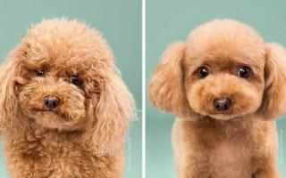 Хитрости заводчиков для борьбы с колтунами у собак