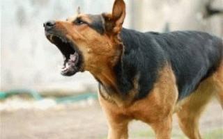 20 советов: как отучить собаку лаять