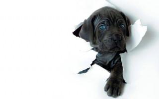 4 лучших способа отучить собаку грызть обои
