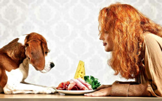 Промышленный корм или натуралка: что выбрать для собак