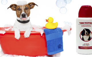 Какой шампунь от блох для собак лучше: рекомендации ветеринаров