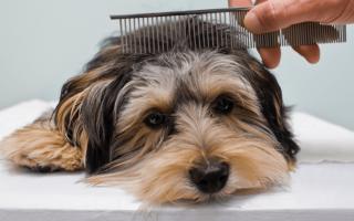 Уход за собачьей шерстью – правила и приспособления