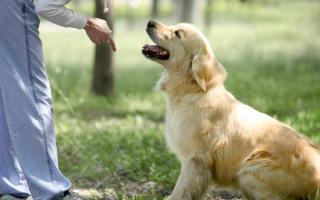 Нуженли моей собаке инструктор подрессировке?