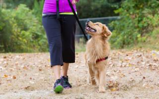 Почему собака должна идти слева от хозяина