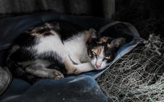 Что делать, если кот прячется в темные места