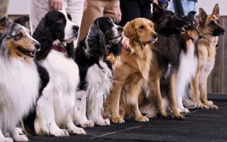 Каких собак лучше разводить для продажи: топ-5 пород с фото