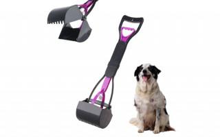 Полезные советы по уборке туалета за собакой