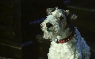 10 пород собак, которые уживутся с Овном