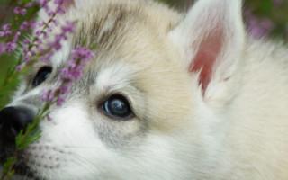 Самая первая порода собаки в мире: история появления