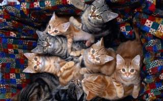Популярные имена котов