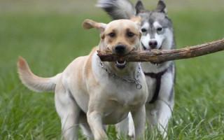 Как научить собаку приносить предметы хозяину