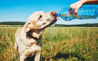 Как помочь собаке в жару дома: как охладить