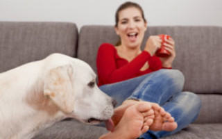 Собака лижет ноги хозяину: причины проявления внимания от питомца