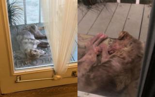 Чудо и добрые люди спасли перепуганную собачку