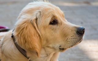 Пощекотать животик: собака знает лучший рецепт от детского плача (доброе видео)