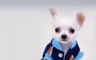 Инструкция по технике безопасности при работе со служебными собаками